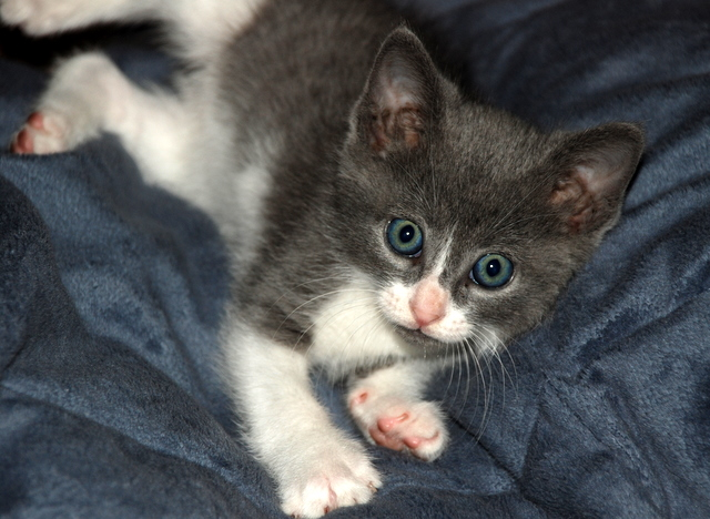 0409_kitten2