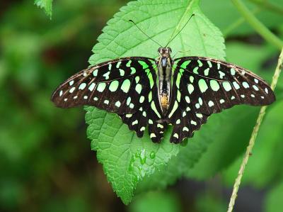 7_butterfly4