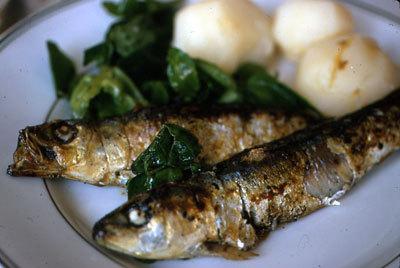 P_sardines_0571