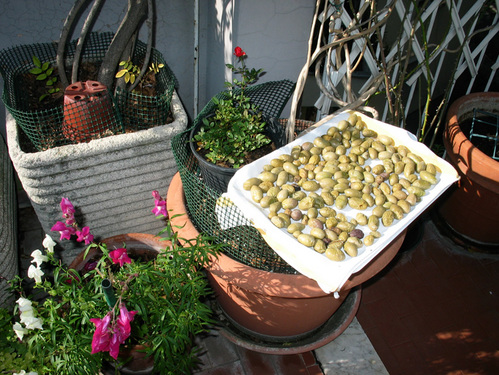 Romapatiolives